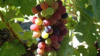 Le Time Lapse du mois d'août sur les vignes de Saint-Estèphe