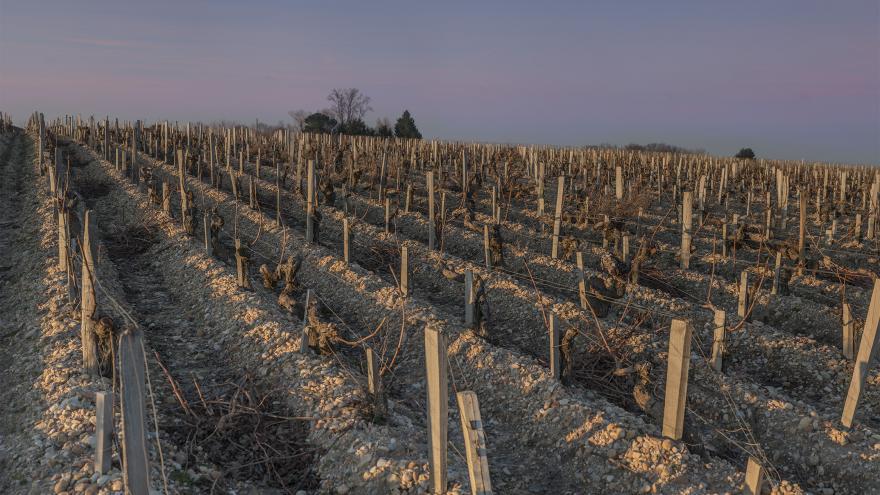 Le cycle végétatif de la vigne à Saint-Estèphe par Visionair